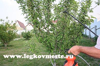 Обработка деревьев от тли