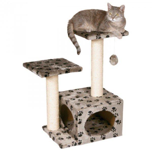 кошка и кошачий домик