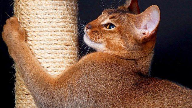 Как сделать для кошки когтеточку