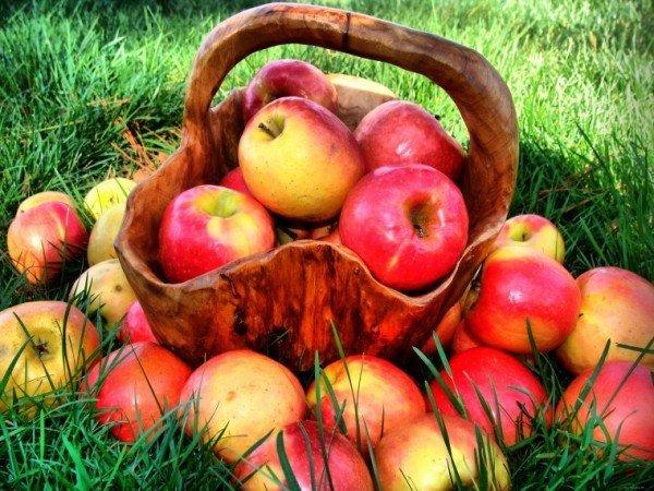 яблоки для консервации на зиму