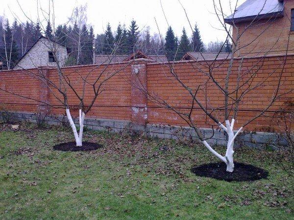 удобрение плодовых деревьев весной
