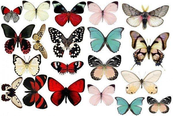 Шаблоны бабочек на стену