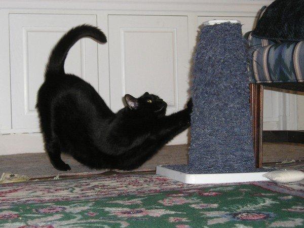 как уберечь обои от кошки
