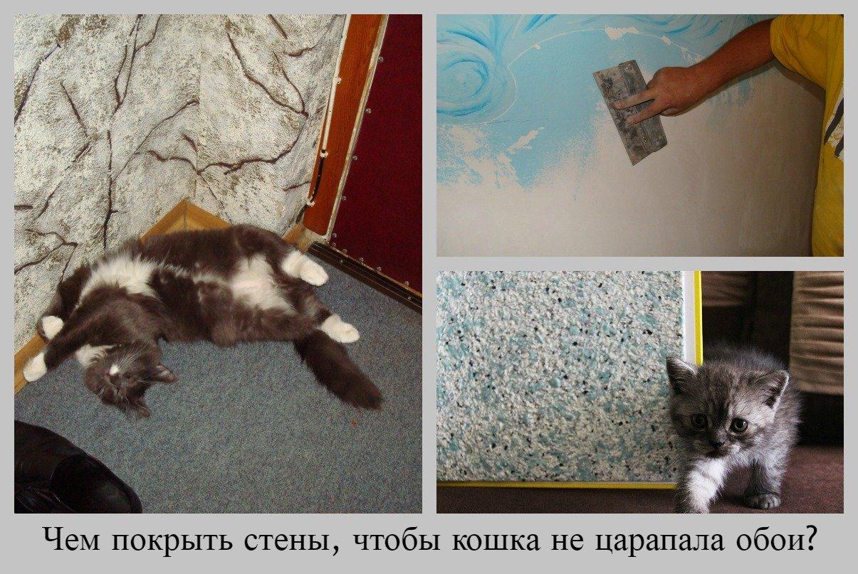 Что сделать чтобы кот на царапал обои