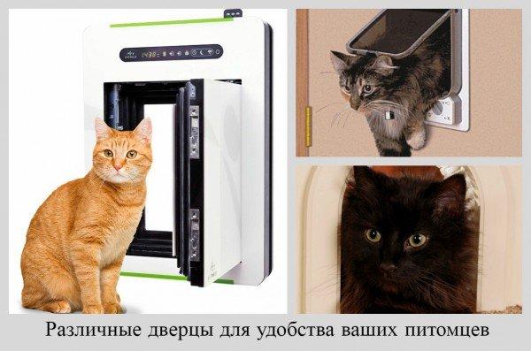 защита обоев для кошек