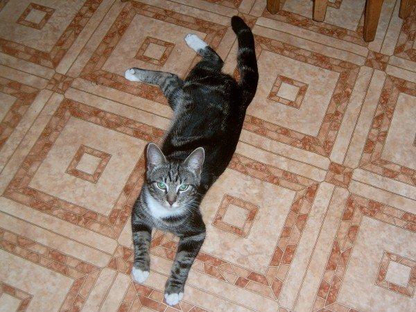 защита обоев от кошек
