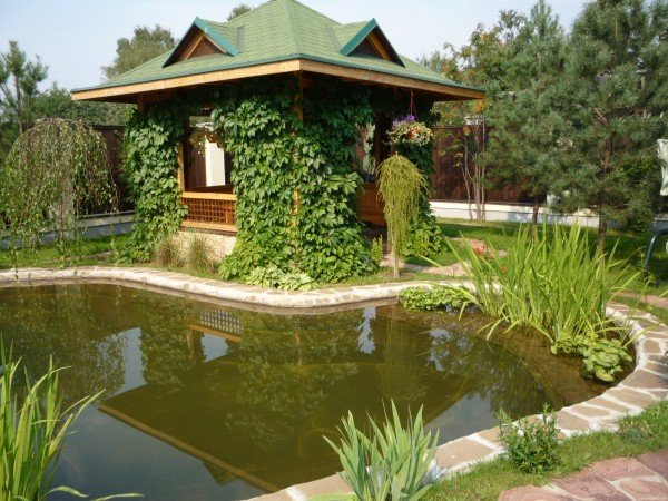 как правильно разместить пруд в саду