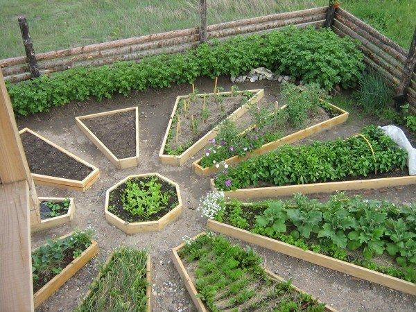 зола для удобрения огорода