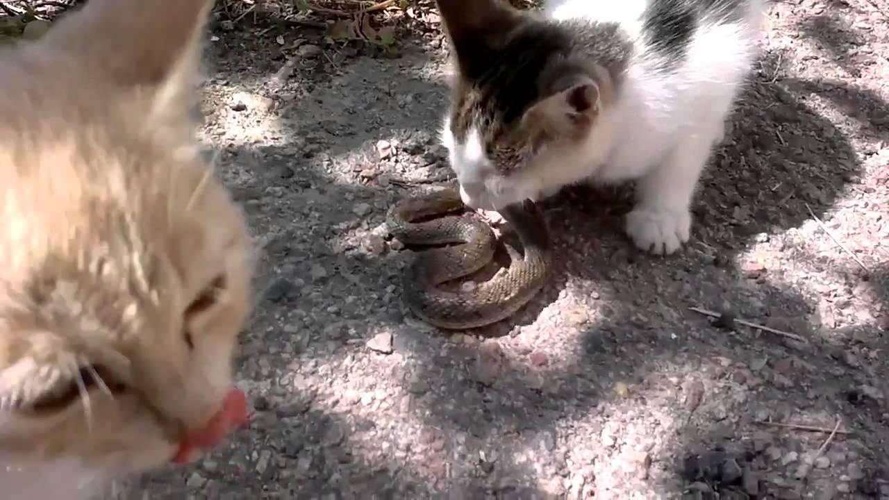 змеи башкирии фото и названия