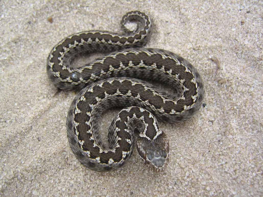 Борьба со змеями на садовом участке 4