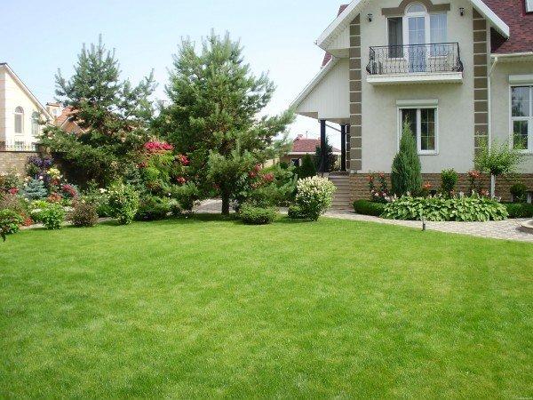 выбор газонокосилки