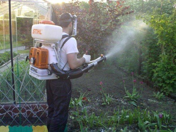 опрыскивание растений для избавления от плодожорки