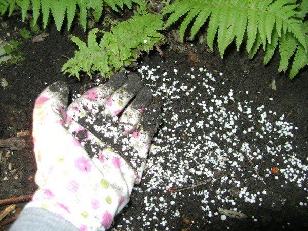 почва для садовых роз с удобрениями