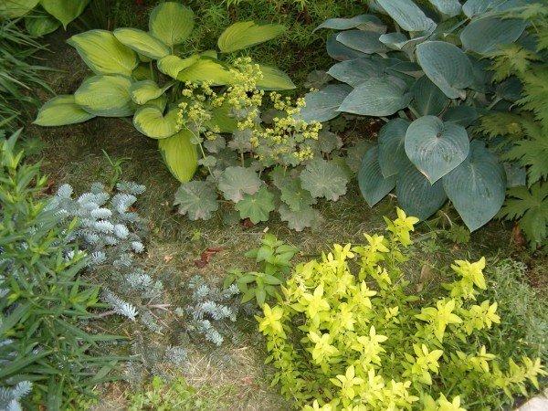крупнолиственные растения в миксбордере
