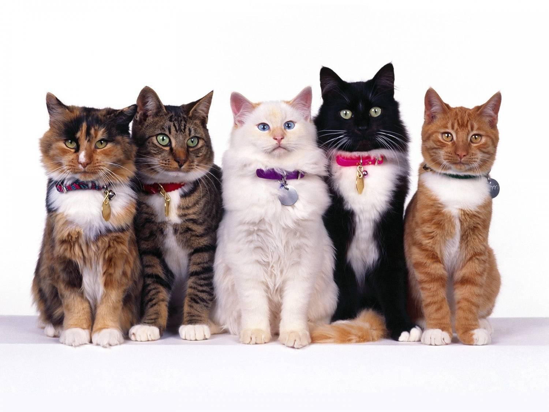 Ошейник для кота своими руками фото 772