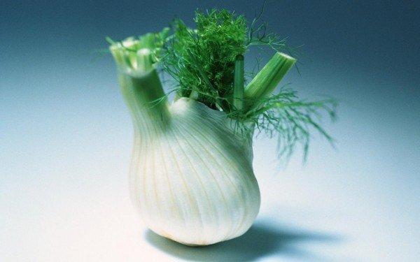 Кочанчик овощного фенхеля