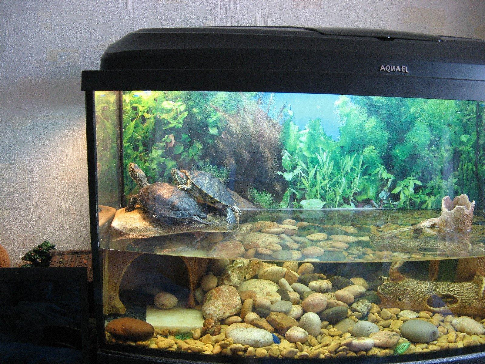 Украсить аквариум своими руками черепахам 3