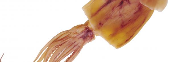 можно ли есть кальмары при повышенном холестерине