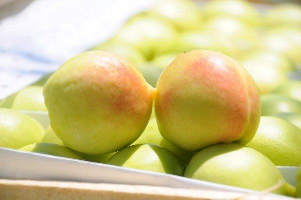 Как выращивать персики в домашних условиях - Medic-test.ru