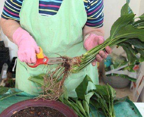 Обработка корней