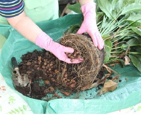 Очистка корневища