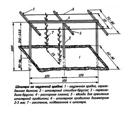 Схема посадки огурцов на шпалеру