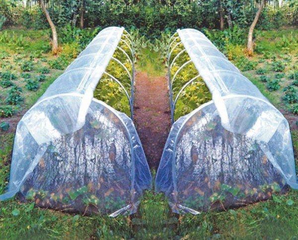 Тоннельный способ выращивания огурцов