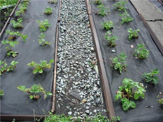 Черная пленка для выращивания клубники 688