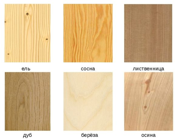 Отличия дерева различных пород по строению и цвету волокон