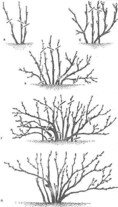 Схема обрезки