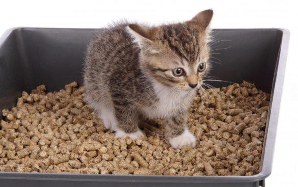 Котёнок в туалете с древесным наполнителем