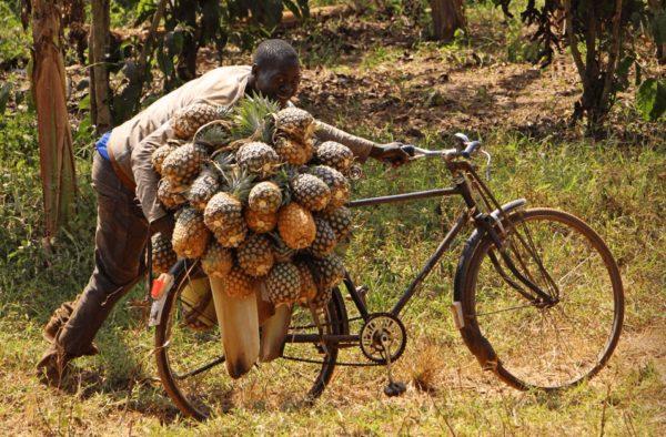 мужчина с урожаем ананасов