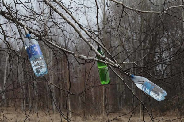 бутылки на ветках берёзы