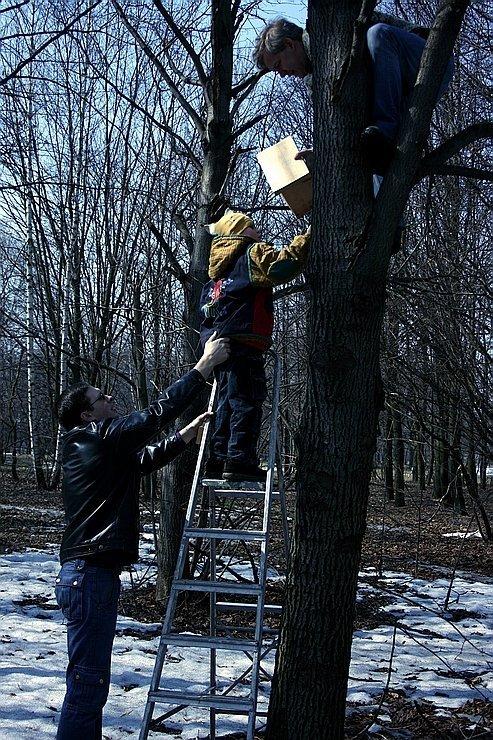 люди вешают скворечник на дерево