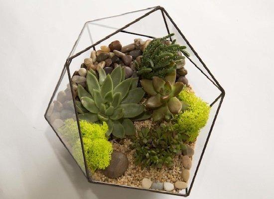 Флорариум в геометрическом сосуде