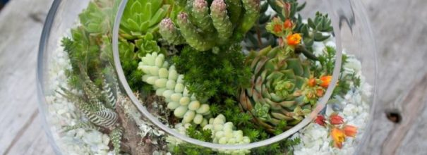 Флорариум в круглой стеклянной ёмкости