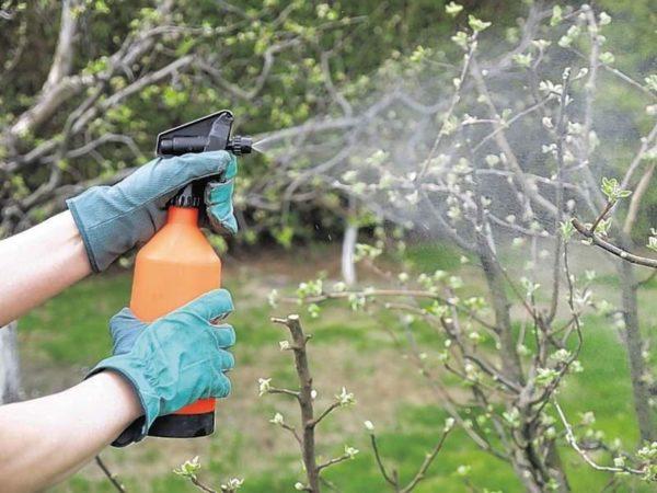 Подкормка деревьев в саду