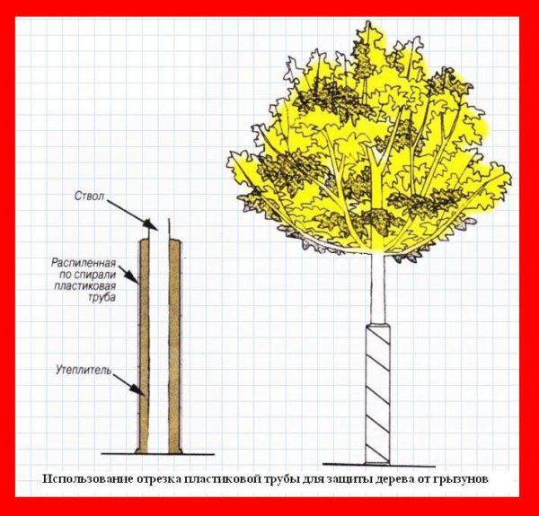 Защита ствола дерева от грызунов