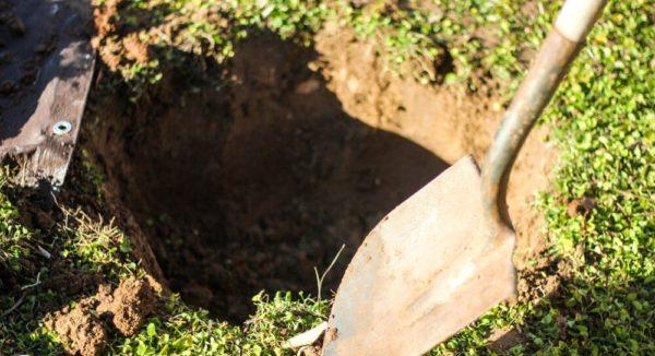 Посадочная яма для вишни