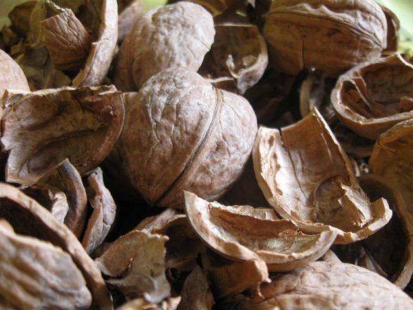 Грецкий орех скорлупа