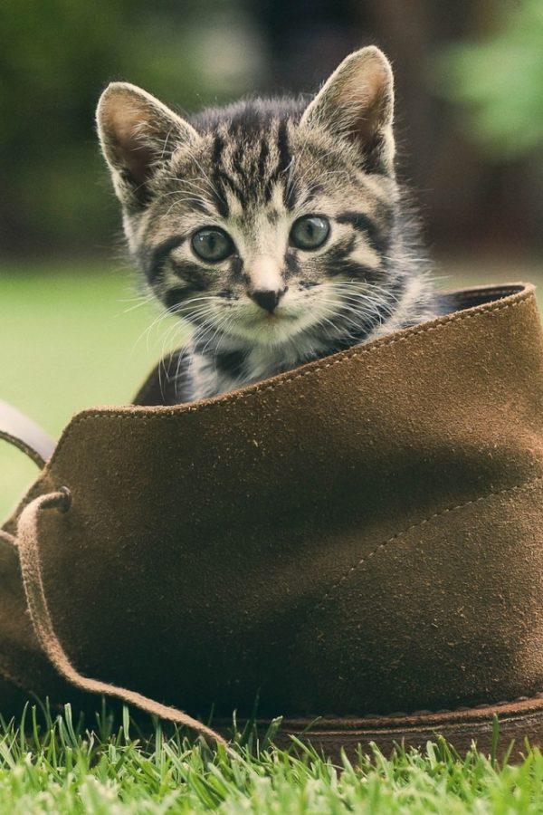 Пушистая причина неприятного запаха в ботинках
