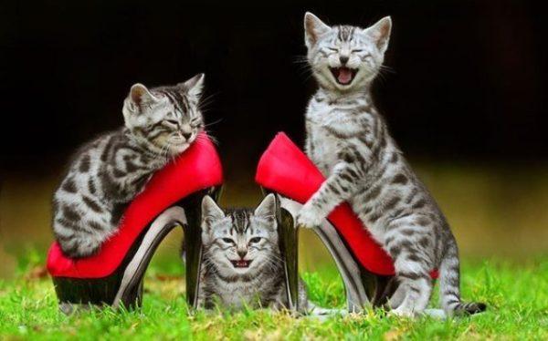 Коты и обувь