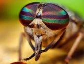 муха в банке