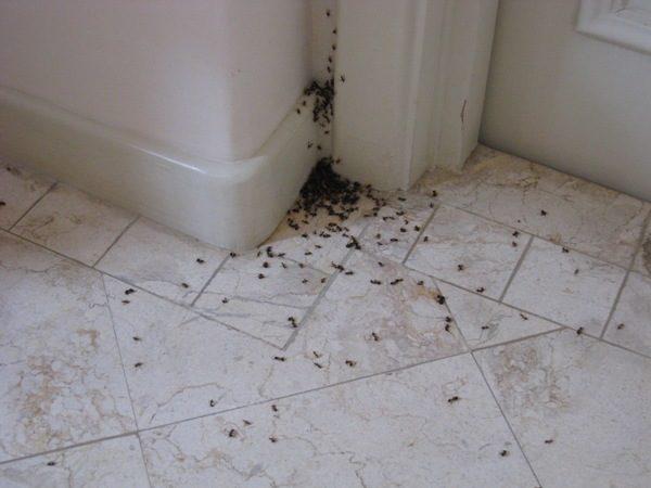 Муравьи в ванной комнате