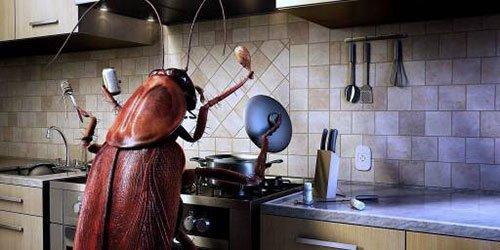 Использование ультразвука от тараканов в квартире