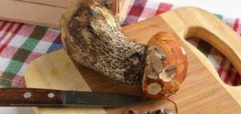 Удаление с гриба повреждённых участков