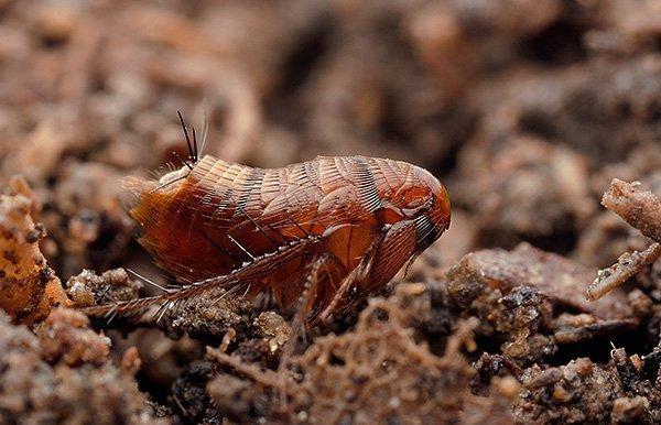 земляные паразиты в огороде