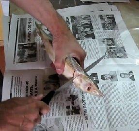 Замороженная осетровая рыба