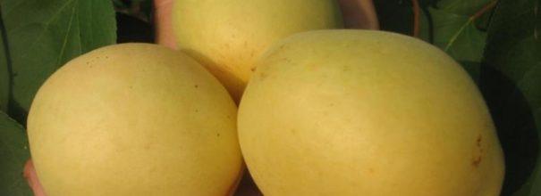 Ананасный - чудо абрикос