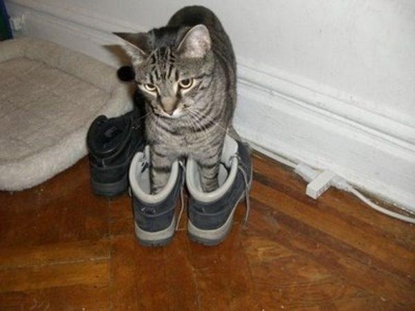 Частая причина неприятного запаха в обуви — кошачьи метки